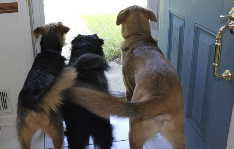 Собаки виляют хвостом