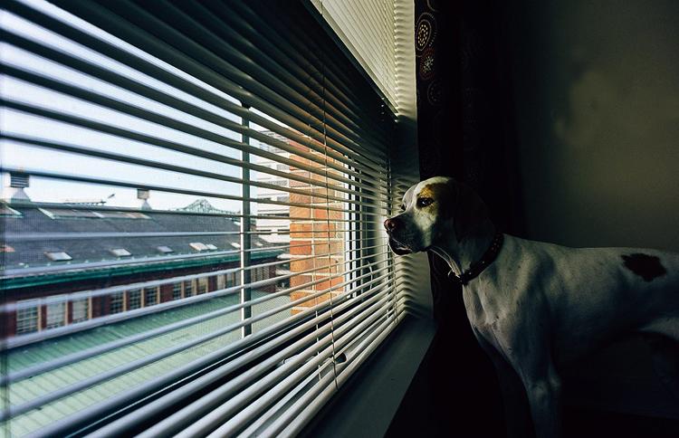 Собака дома