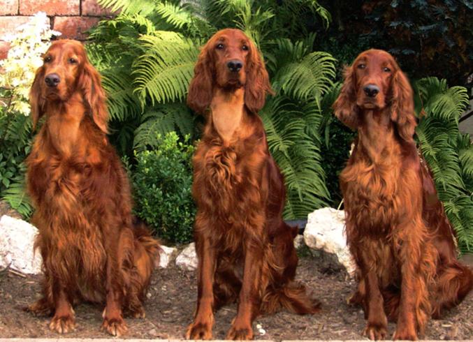 3 красавца