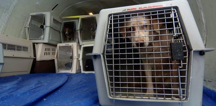 Собака в багажном отсеке