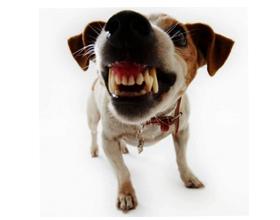 Что значит если собака скрепит зубами