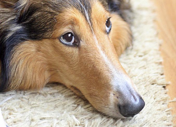 Разгрузочный день у собаки