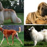 Самые древние породы собак в мире: описание и фото