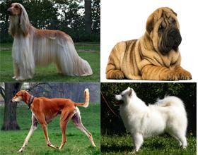 Самые древние породы собак в мире