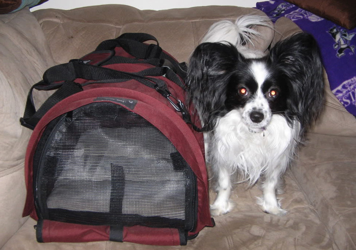 Собака с контейнером