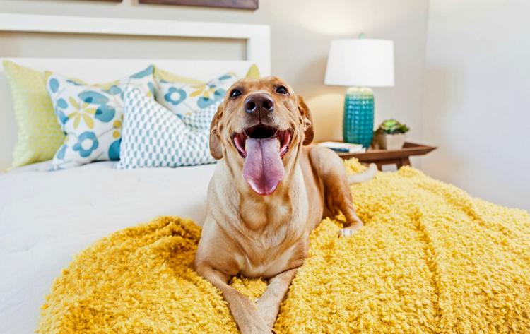 Собака на кровате