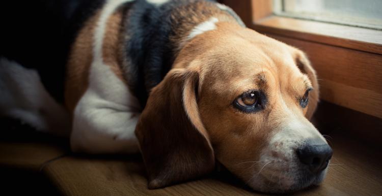 Проблемы с желудком у собаки