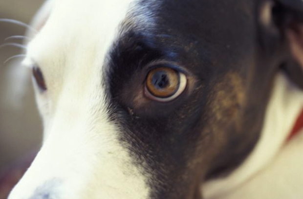 Собака после сотрясения