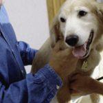 Какая должна быть норма пульса у собаки?
