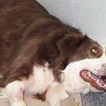 Судороги у собаки: причины, лечение и что делать