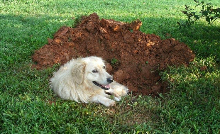 Собака с ямой