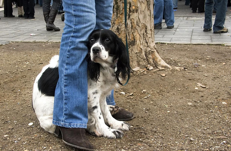 Боязливая собака