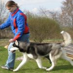 Как научить собаку команде «Рядом»