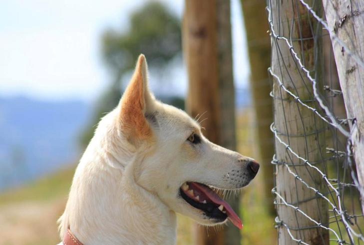 Соломенная собака в лесу