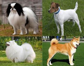 Породы японских собак