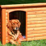 Как правильно приучить собаку к будке