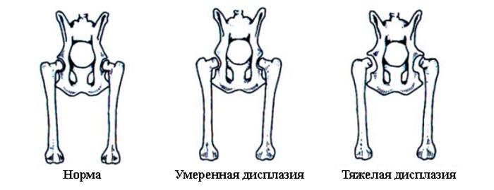 Дисплазия тазобедренных суставов у щенят физиотерапия при артрите плечевого сустава