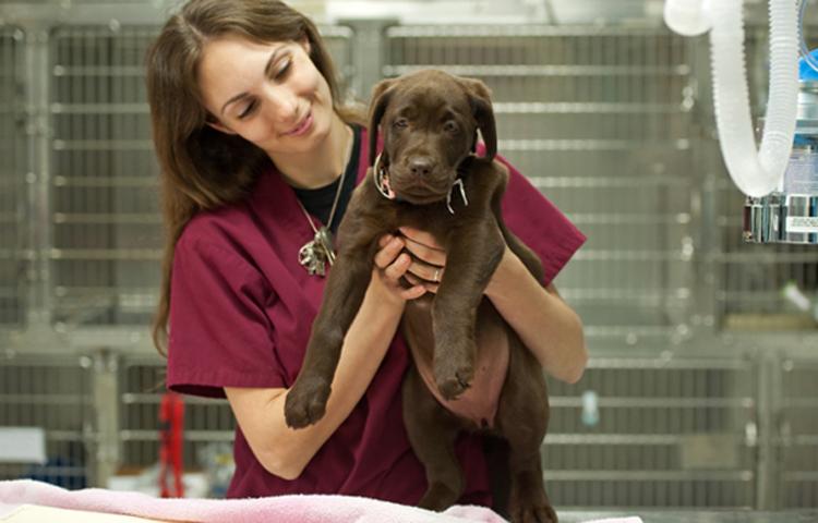 Ветеринар с собакой у которой герпес