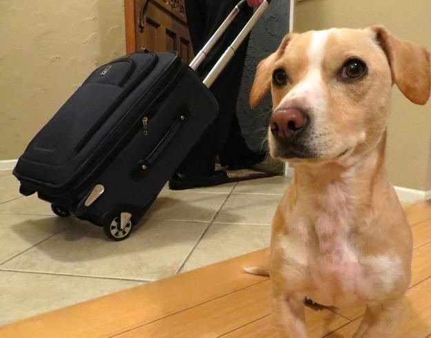 Собака остается дома дома