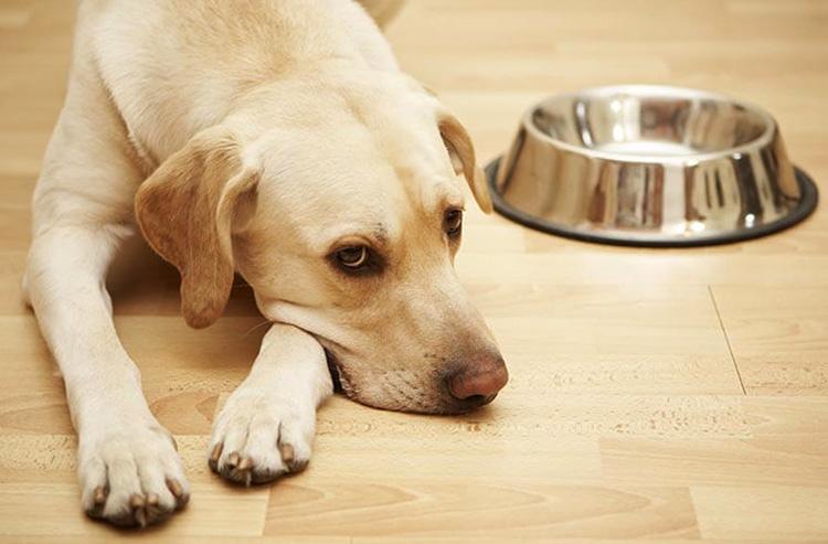 Что делать если собака не ест и худеет