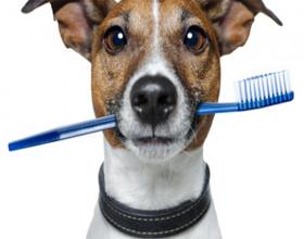 Как почистить зубы собаке в домашних условиях?