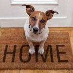 Сколько в среднем живут собаки в домашних условиях?