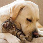 Как приучить собаку к котенку — полезные советы