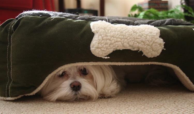 Песик спит под кроватью