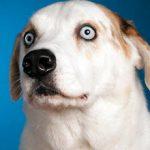 Что делать если собака боится громких звуков?