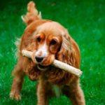 Как научить собаку команде «Апорт» — полезные советы и приемы
