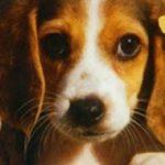 Как научить собаку команде голос — советы и упражнения