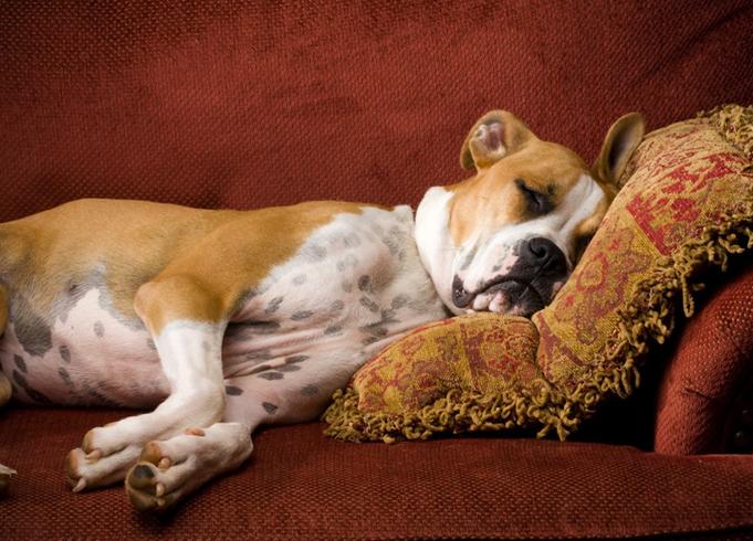 Собака в домашних условиях