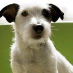 Если собака икает: причины и что делать