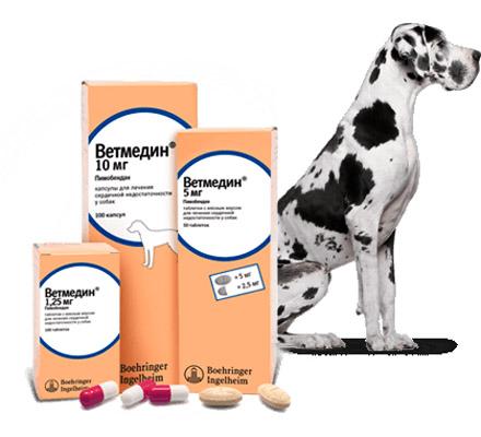 Ветмедин - препарат для собак