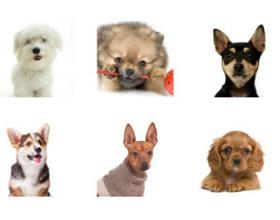Карманные породы собак с фотографиями и названиями