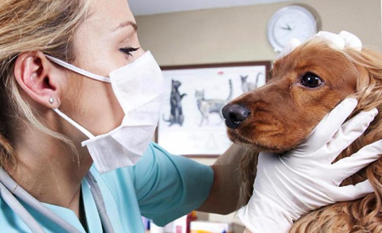 Определение ангины у собаки