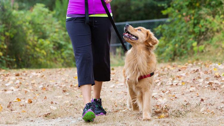 Собака обучается команде рядом