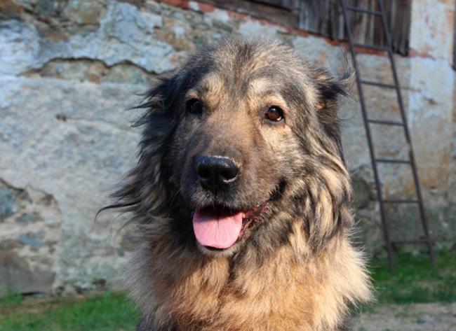 У пса тахикардия