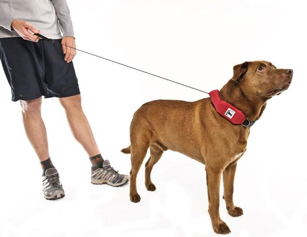 Хозяин с собакой на поводке
