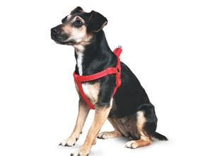 Шлейка для собак: что нужно знать и как правильно одеть