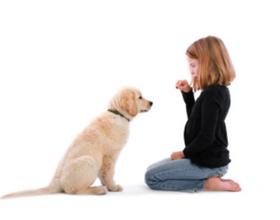 """Как научить собаку команде """"сидеть"""""""