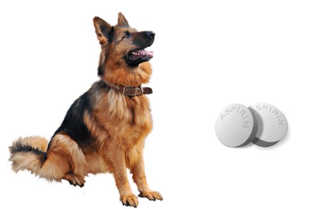 Собака и аспирин