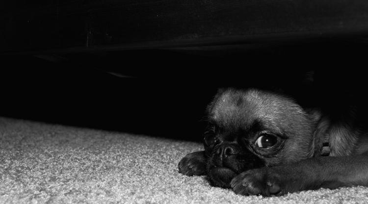 Собачка спит под кроватью