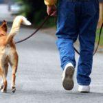 Правила выгула собак в городе (по закону)