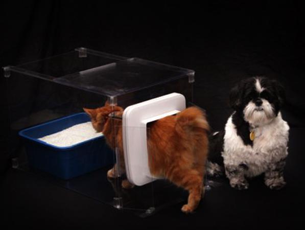 Маленькие кошка и собачка