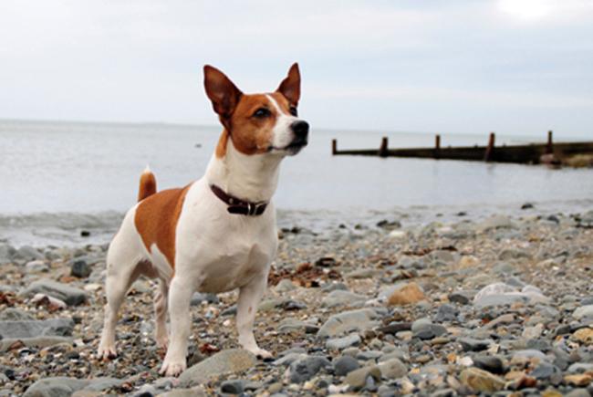 Собачка на пляже