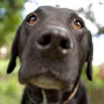 Как поднять собаке иммунитет и почему он ослабевает?
