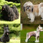 Гипоаллергенные породы собак: названия, описание и фотографии