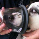 Астма у собак: признаки, симптомы и лечение