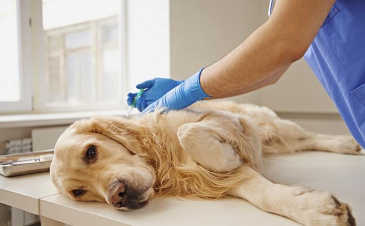 Картинки по запросу эвтаназия для животных  преимущества